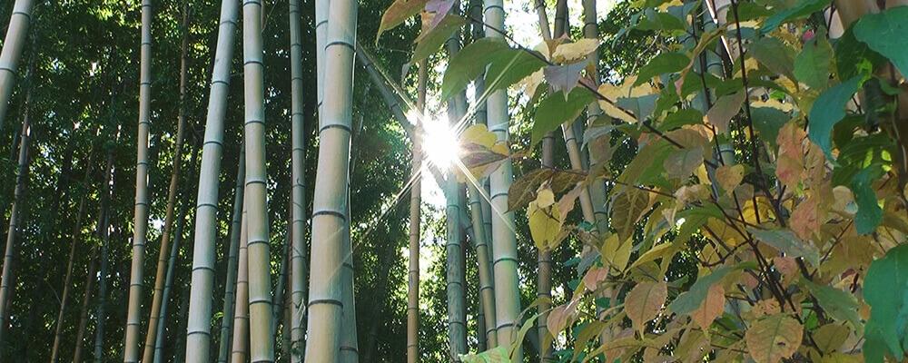 窪・高尾の竹林